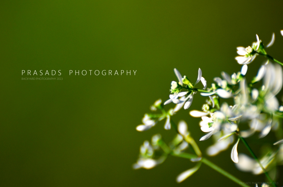 BackyardPhotography_Green1-b
