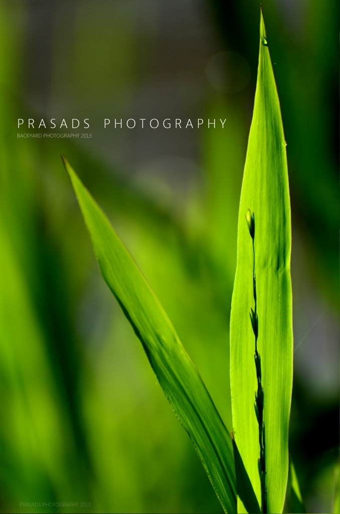 BackyardPhotography_Green11