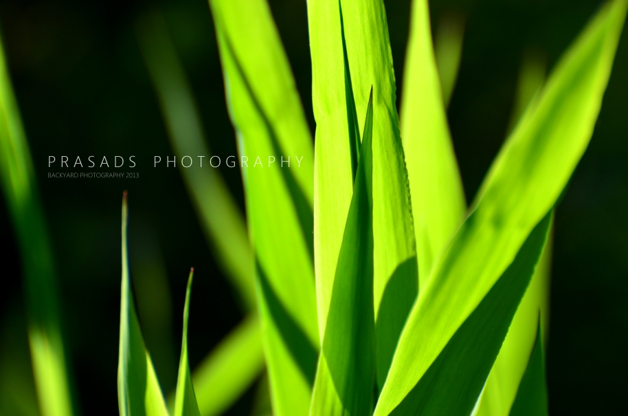 BackyardPhotography_Green4