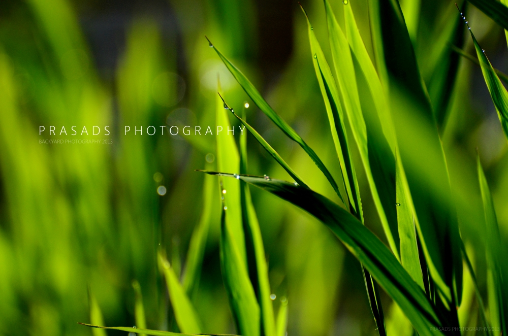 BackyardPhotography_Green5