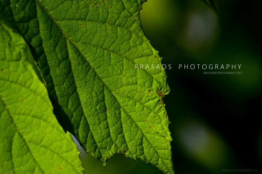 BackyardPhotography_Green6