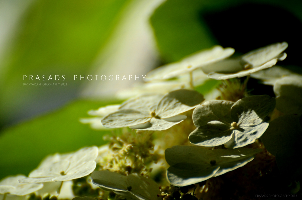 BackyardPhotography_Green7-A