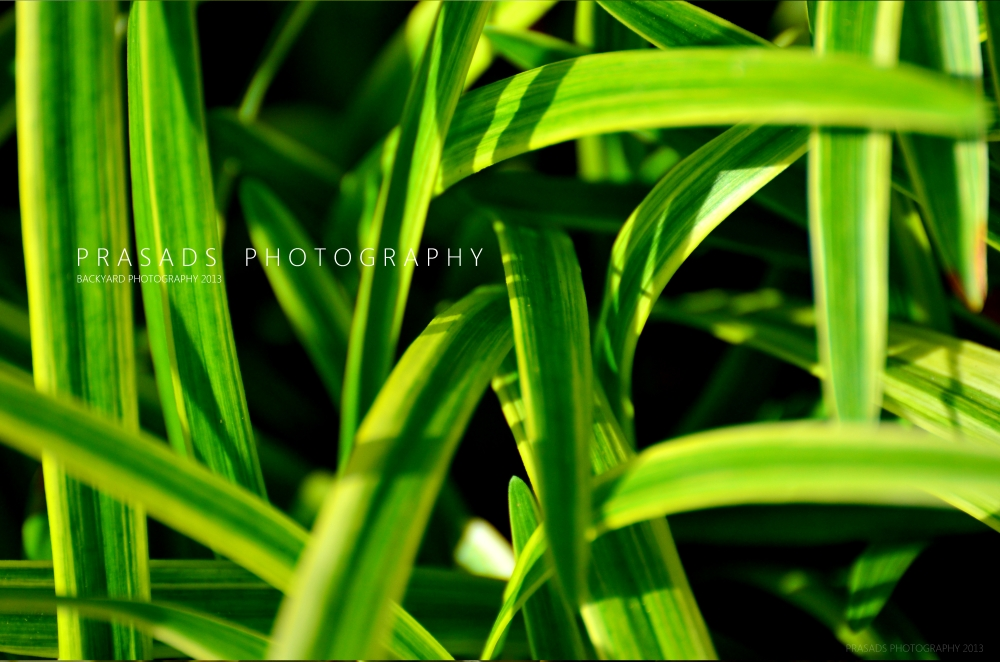 BackyardPhotography_Green8