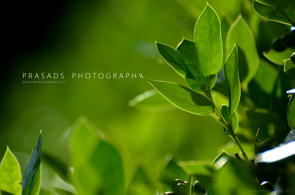 BackyardPhotography_Green9